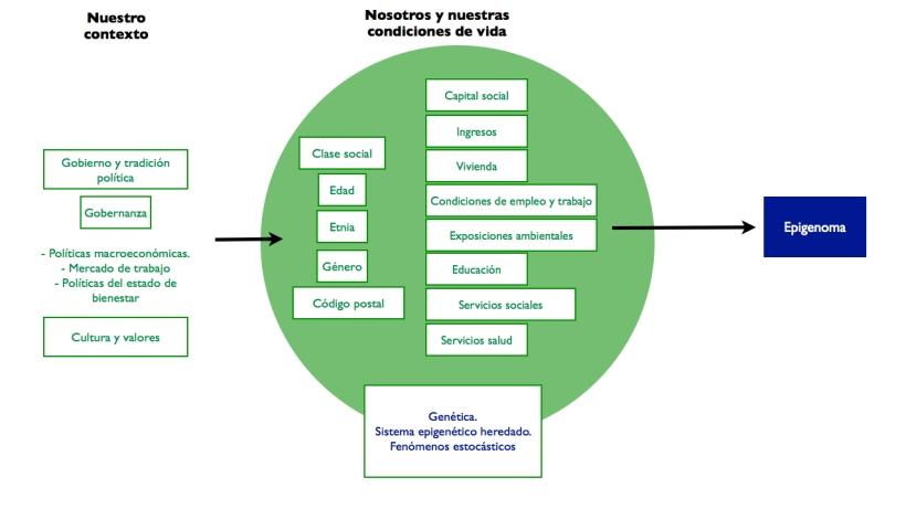 AMF SDOH y Epigenetica Figura.004