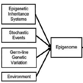 Epigenoma 0