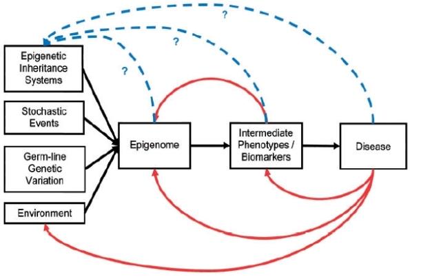 Epigenoma 1