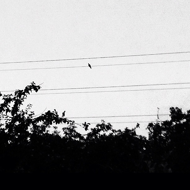 Loneliness of a flying music note