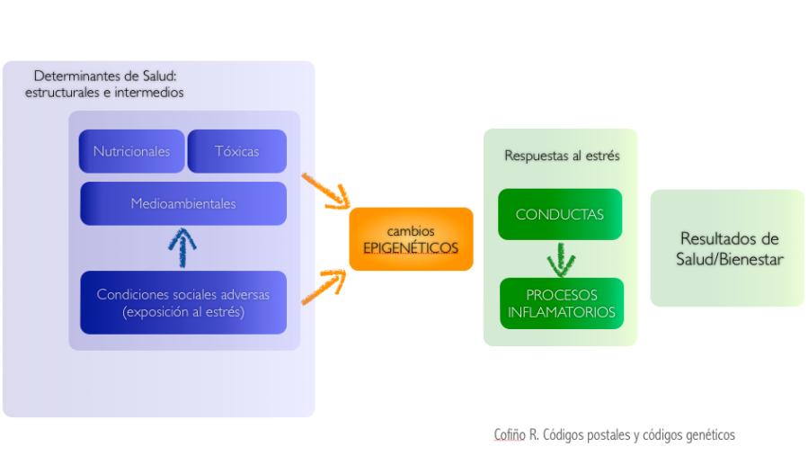 Epigenética, determinantes sociales y desigualdades en salud https://saludcomunitaria.wordpress.com/2015/11/01/epigenetica-pobreza-y-enfermedad/