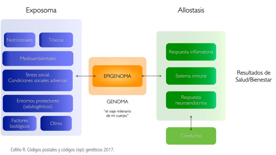 epigenetica_cofino